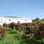 Viñedo de Bodegas Tierra Savia. Imagen de archivo.