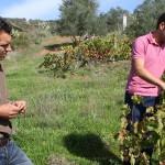Pedro y José Antonio nos muestran la viña. Foto: La Plaza.
