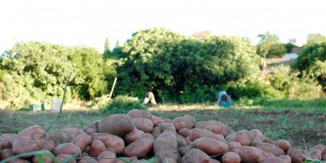 La Despensa del Azahín, un proyecto de agricultura ecológica en la Sierra Morena sevillana