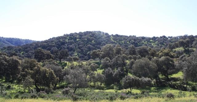 Comienza a gestarse la programación de otoño en las Dehesas de Sierra Morena