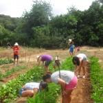 Los niños aprenden a cultivar en el huerto del Centro de Naturaleza El Remolino. Foto: C.N. El Remolino