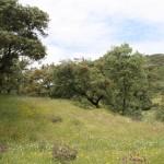 Sierra Norte-Cazalla-Oruga 600x400 (1)