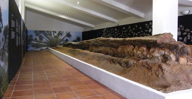 Almadén de la Plata exhibe ya el tronco fósil del Viar con 300 millones de años
