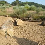 tronco-fosil-1