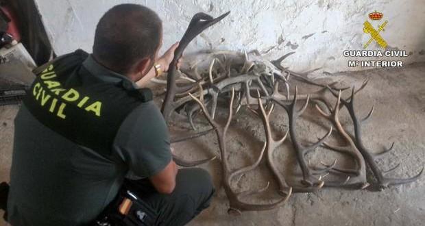Cuatro investigados por el robo de cuernas en una finca de El Pedroso